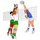 Volejbal - ilustrační obrázek